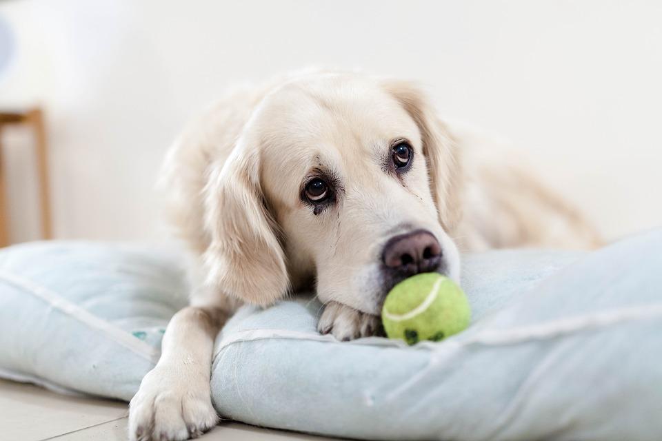 テニスボールと犬